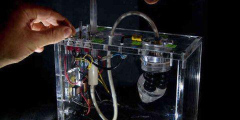 Piccoli robot crescono come le piante: made in Italy il progetto Ue 'Plantoid'