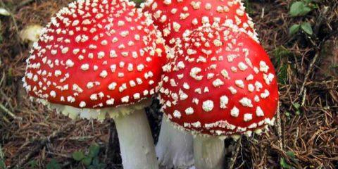 #Storie. Autunno, tempo di funghi ma attenti: talvolta sono proprio 'malefici'!
