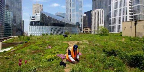Smart city, a Milano giardini sui tetti per tagliare consumi e bolletta del 30%