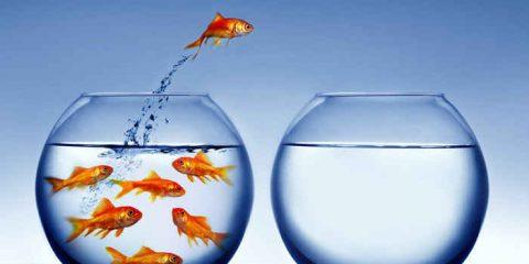 dcx. Il successo dipende dal tuo 'oceano blu'