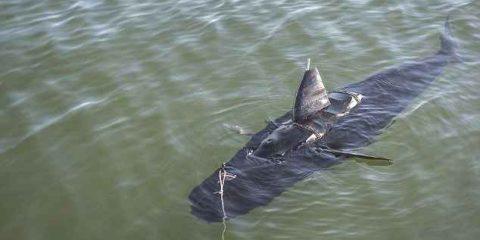 La Marina USA 'arruola' il pesce drone (videonews)