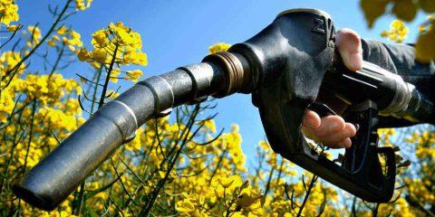 Biocarburanti, no degli agricoltori europei ai tagli dei derivati da produzioni verdi