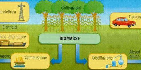 Che cosa sono le biomasse