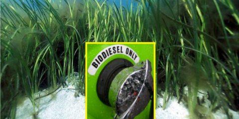 Biocarburanti: Parlamento Ue verso un passaggio veloce alle fonti alternative
