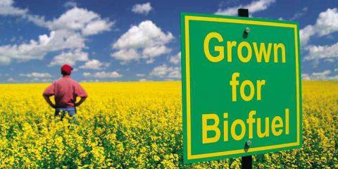 Biocarburanti: in Grecia si 'coltivano' quelli per gli aerei (video)