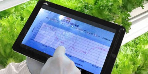 Internet delle verdure: il M2M per coltivare frutta e lattuga