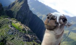 Il selfie del lama sul Machu Picchu