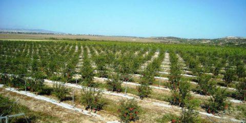 EntARTainment, il crowdfunding per la FarmVille all'italiana