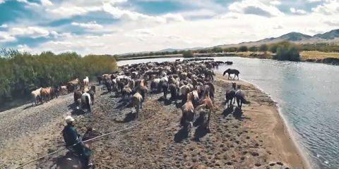 Video Droni. La campagna mongola tra cavalli e cavalieri, vista dal drone
