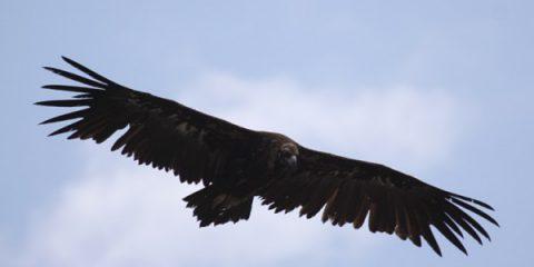 AssetProtection. L'Italia, terra di imprenditori e avvoltoi?