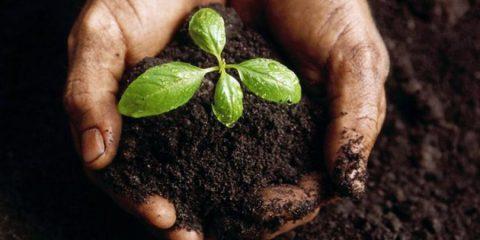 Cambiamento climatico: come combatterlo in agricoltura