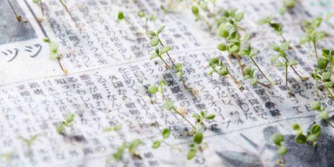 Green cities, dal Giappone il giornale che prima si legge e poi si 'pianta'