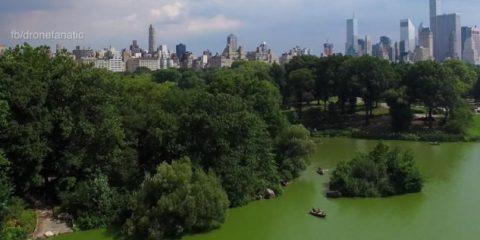 Video Droni. Passeggiata d'amore al Central Park (New York) ripresa dal drone