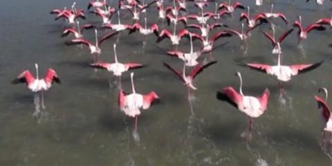 Video droni. Le saline di Aigues Mortes (Provenza) viste dal drone