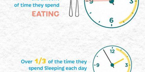 Smartphone, quanto ci stiamo ogni giorno?