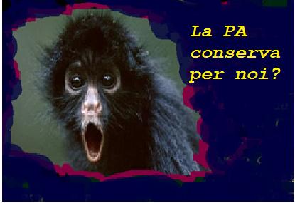 scimmietta.jpg