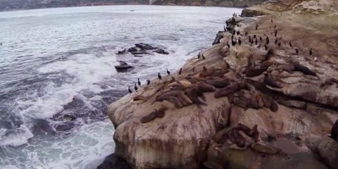Video droni. La Jolla (San Diego-California): leoni marini, cormorani e onde visti dal drone