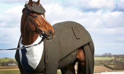 cavallo con vestito