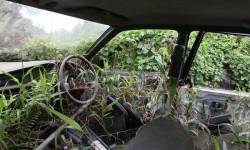 auto ricoperta di vegetazione