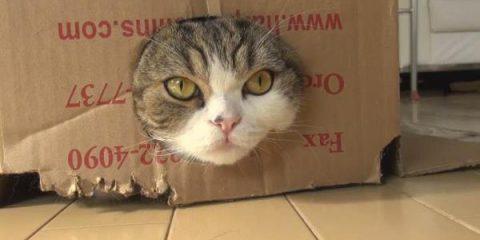 Social media: ecco perché guardare video di gattini fa bene