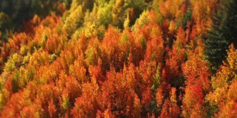 Video droni. I colori dell'autunno tra i laghi di Queenstown (Nuova Zelanda)