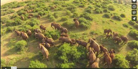 Videodroni. Tra monti e coste, laghi e safari: il Kenya visto dal drone