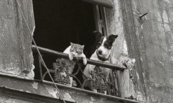 Dog and Cat in Paris,
