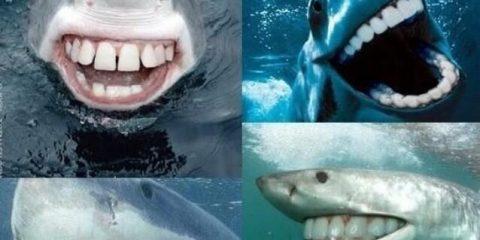 Vacanze ittiche odontoiatriche: gli squali dopo la visita con il dentista croato