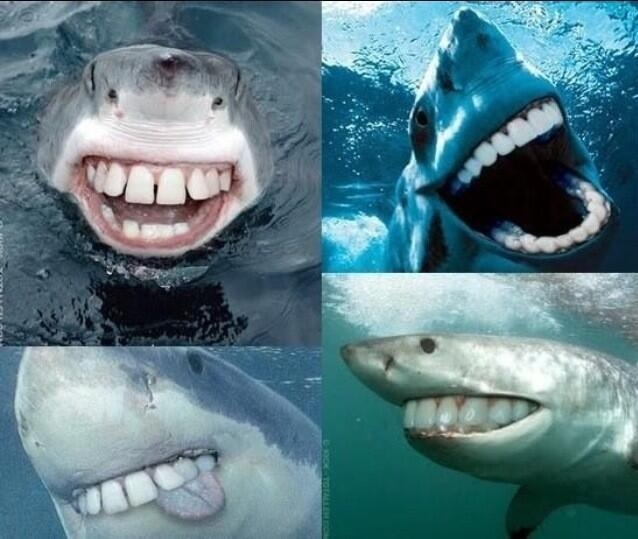 sharkswithhumanteeth