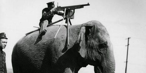 Altro che truppe cammellate. Guerra 1915-'18: elefante con in groppa un mitragliatore M1985 della Browning-Colt