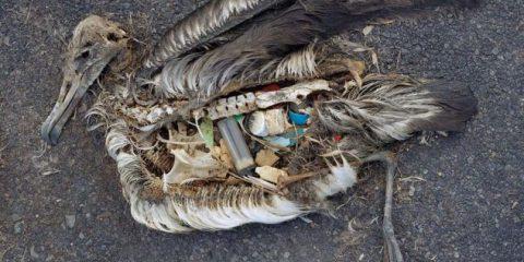 Sostenibilità. World Economic Forum: 'Nel 2050 negli oceani ci sarà più plastica che pesci'