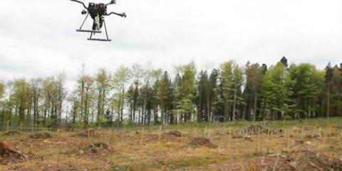 Ambiente, seminare con i droni? Fino a 1 miliardo di nuovi alberi l'anno (Video)