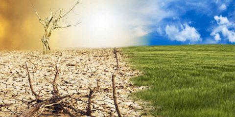 Green economy, torneranno le foreste in Nord Africa. Boschi italiani raddoppiati negli ultimi 100 anni