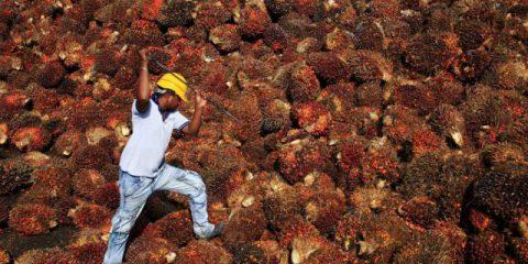 In UK il bando contro l'olio di palma mette a rischio la vendita dei caccia alla Malesia, Scontro McCain-Trump, Catalogna