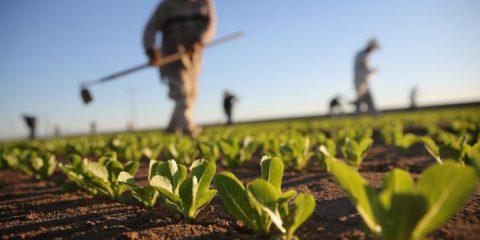 Finanza Agevolata. Contributo a fondo perduto per sostenere giovani agricoltori