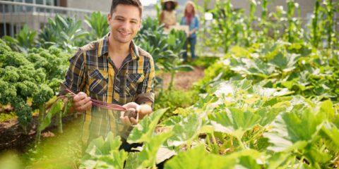 Finanza Agevolata. Contributo a fondo perduto per l'insediamento di giovani agricoltori nelle Marche