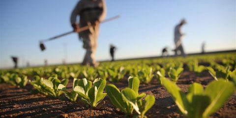 Agricoltura, investimenti per lo sviluppo dei prodotti
