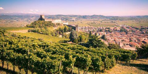 Sviluppo delle aziende agricole e delle imprese nelle zone rurali. Il bando della Regione Basilicata