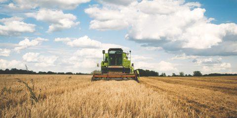 Sostegno a favore di imprese attive nella produzione di prodotti agricoli. Il bando