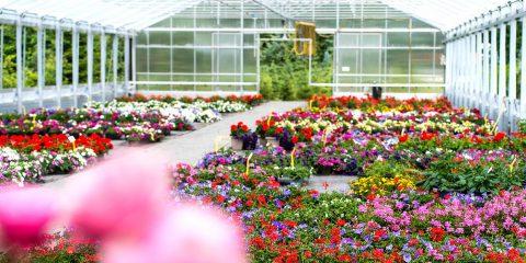 Covid-19, misure a sostegno delle aziende del settore florovivaistico