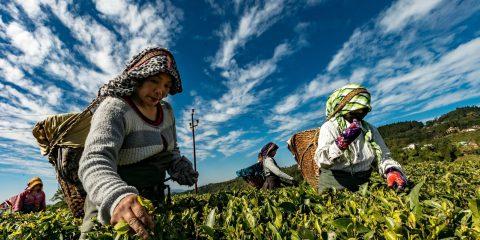 Smart Agriculture, la tecnologia per il benessere di tutti?