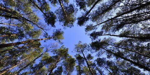 Ministero della transizione ecologica per la riforestazione urbana