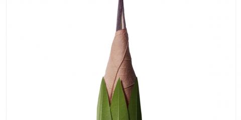 Il 30 marzo 1858 nasce la matita con gomma da cancellare